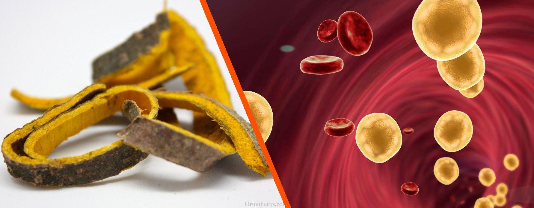 Hoàng bá – vị thuốc Đông y không thể thiếu cho người bệnh tim mạch